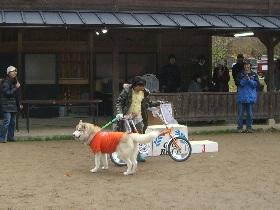 2008 11月京都ギグ 102(1)