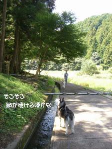 2009 9月鮎料理 017
