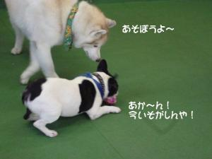 2011 9月姫路1ヶ月検診 017B