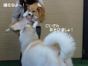 2011 9月姫路1ヶ月検診 015A