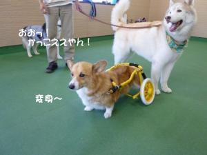 2011 9月姫路1ヶ月検診 030a