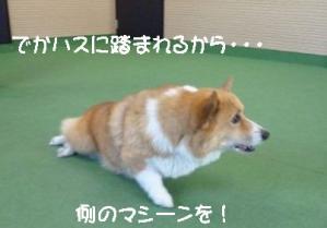 2011 9月姫路1ヶ月検診 012