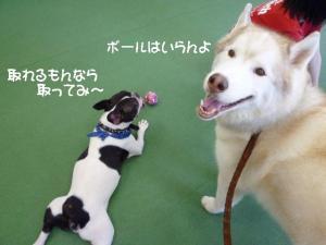 2011 9月姫路1ヶ月検診 062a