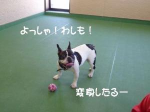 2011 9月姫路1ヶ月検診 028A