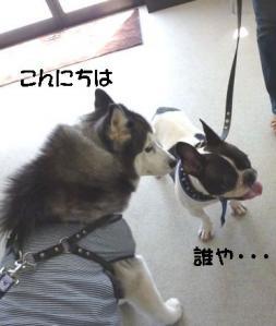 2011 9月姫路1ヶ月検診 006a