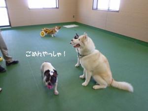 2011 9月姫路1ヶ月検診 035a
