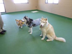 2011 9月姫路1ヶ月検診 036