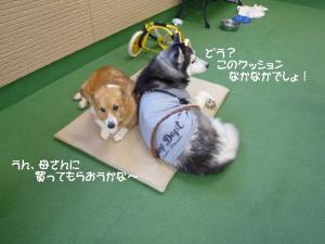 2011 9月姫路1ヶ月検診 055a