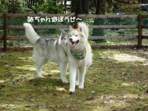 2011 9月清里 006a