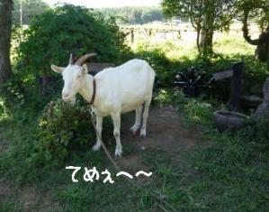2011 9月清里 118a