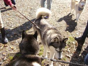 2011 10月キープ協会カンテ祭 003