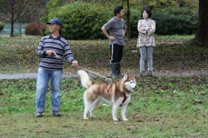 2011 11月ギグレースin京都 250