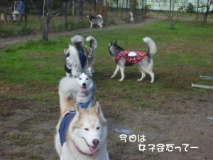 2011 11月愛ハス女子会 023a