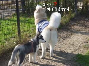 2011 11月愛ハス女子会 033a