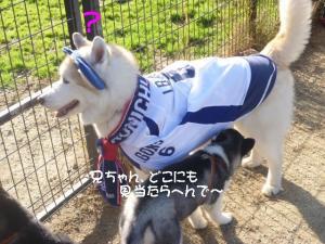 2011 11月愛ハス女子会 082a