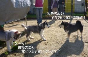 2011 11月愛ハス女子会 047a