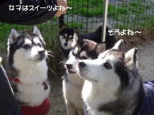 2011 11月愛ハス女子会 053a