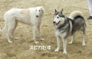 2012 2月大高ラン&大須 014