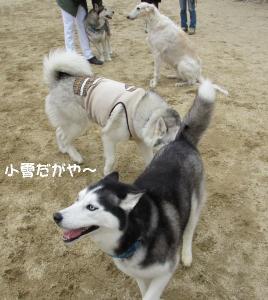 2012 2月大高ラン&大須 013