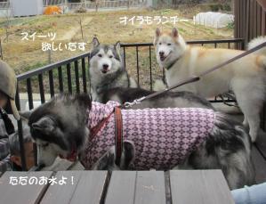 2012 2月大高ラン&大須 017