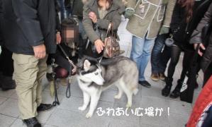 2012 2月大高ラン&大須 032