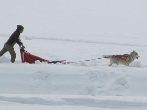 2012 3月ひるがの橇練 021