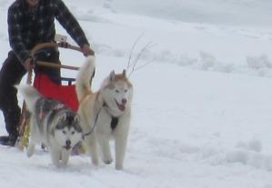 2012 3月ひるがの橇練 012b