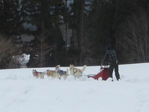 2012 3月ひるがの橇練 037