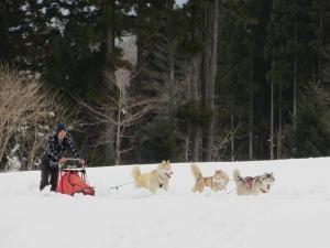 2012 3月ひるがの橇練 036
