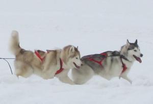 2012 3月ひるがの橇練 031ab