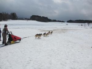 2012 3月ひるがの橇練 023