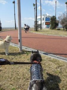2012 3月神戸・六甲・大阪ビア<br />ガーデン 001