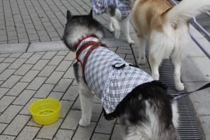 2012 3月神戸・六甲・大阪ビアガーデン 102