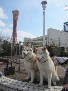 2012 3月神戸・六甲・大阪ビアガーデン 032