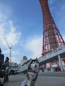 2012 3月神戸・六甲・大阪ビアガーデン 035