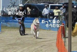 2012 3月ギグレースin美山 018