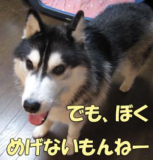 11_20080614142818.jpg