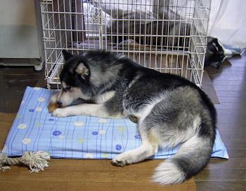 2008-01-12-010.jpg