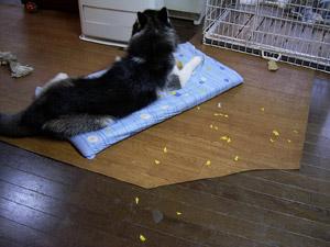 2008-01-23-017.jpg