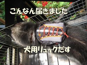 2008-06-10-008.jpg