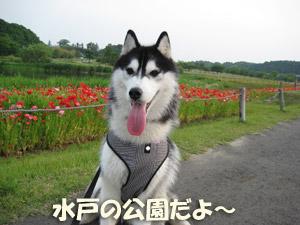2_20080527123805.jpg