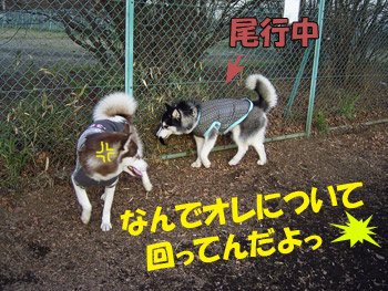 2_20080528145758.jpg