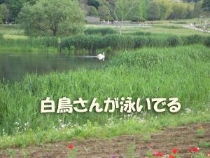 3_20080527123821.jpg
