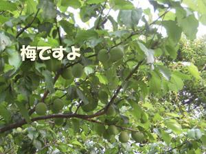 8_20080527124055.jpg