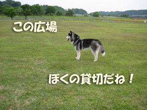 9_20080527124114.jpg