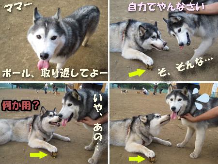 9_chobi3.jpg