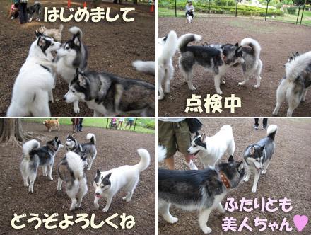 yoyogi1.jpg