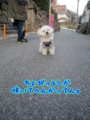 IMG_2922_20120222231323.jpg