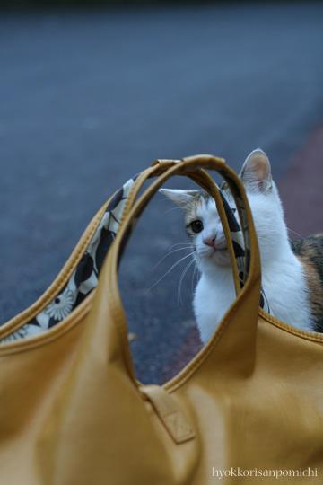 鞄と三毛ちゃん①