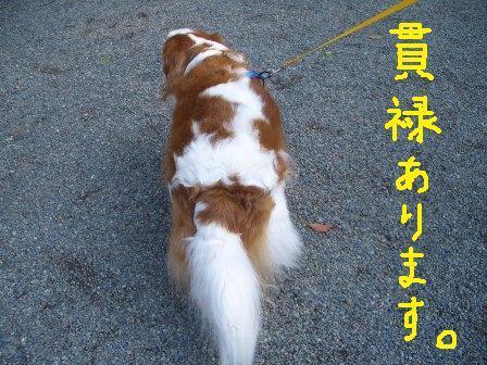 ichi18-c.jpg